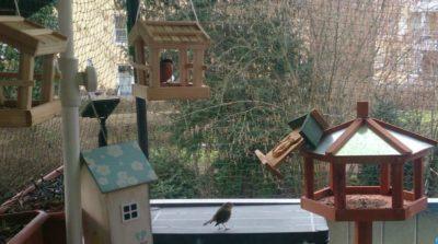 Vögel auf dem Balkon
