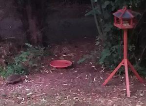 Igel bei uns im Garten
