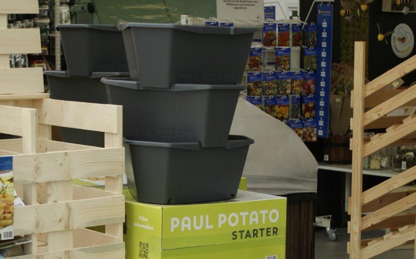 Paul Potato