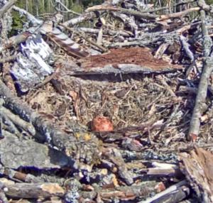 ... das 1. Ei im Nest - entdeckt am 29.4.2019