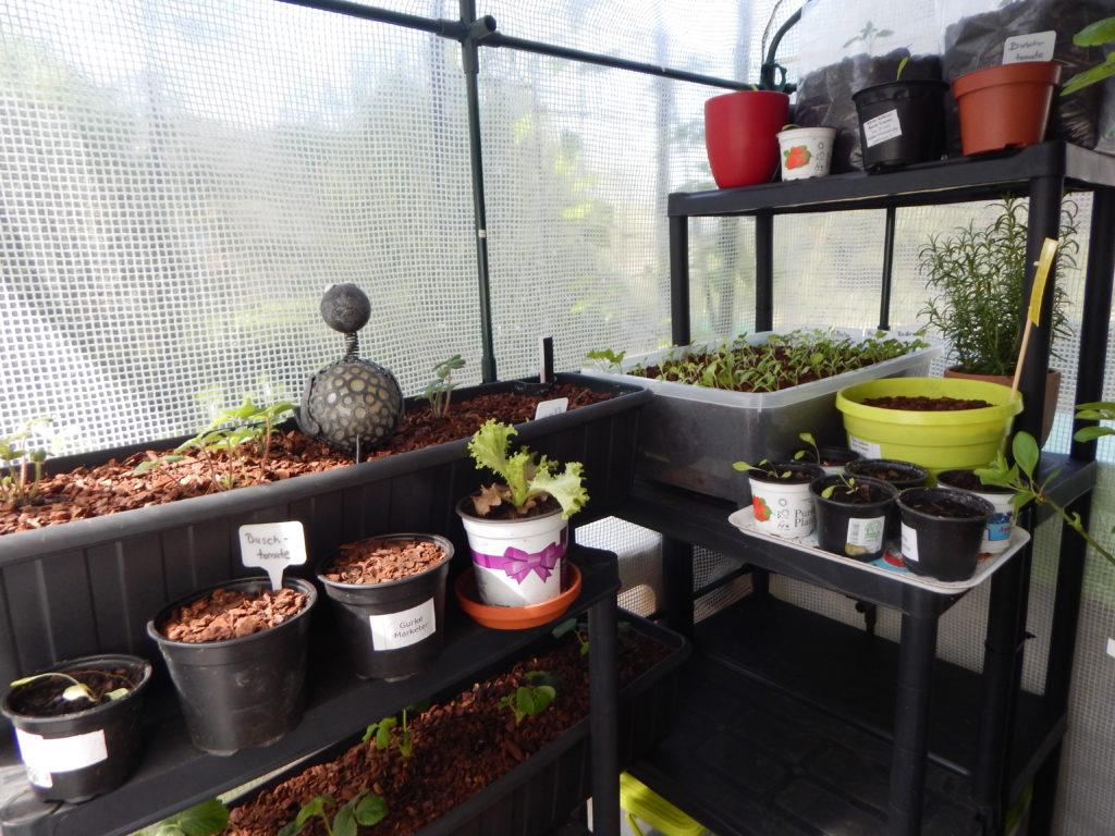 Erdbeeren, Samen von Gurken und Tomaten, große Kiste: Schnittsalat, Möhren