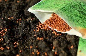 Samen für Pflanzen
