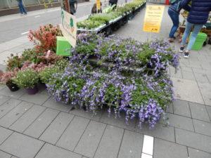 Blumenmarkt Mülheim
