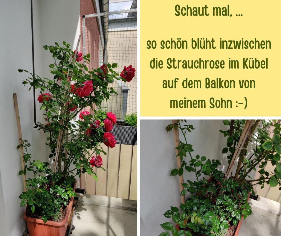 Rose Jan
