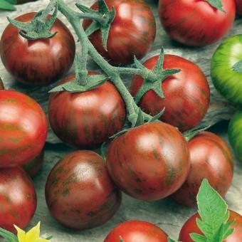 Tomate Zebrino