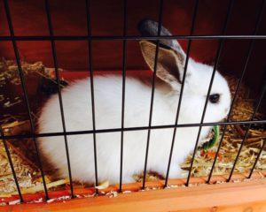 Kaninchen im Käfig