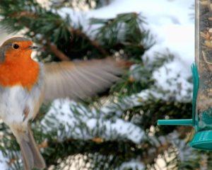 Wintervögel füttern
